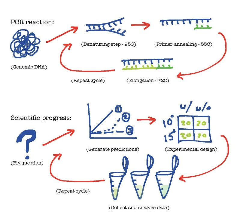 Similarities between good research and a PCR reaction