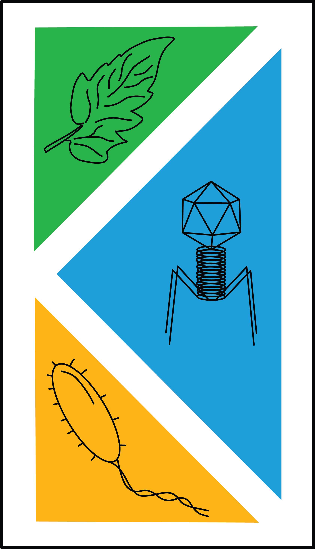 Koskella Lab Logo (Image White Background Complex)